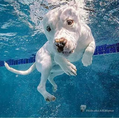 Pin By Dani Gerous On Dogs Dogs Animals Underwater Dogs