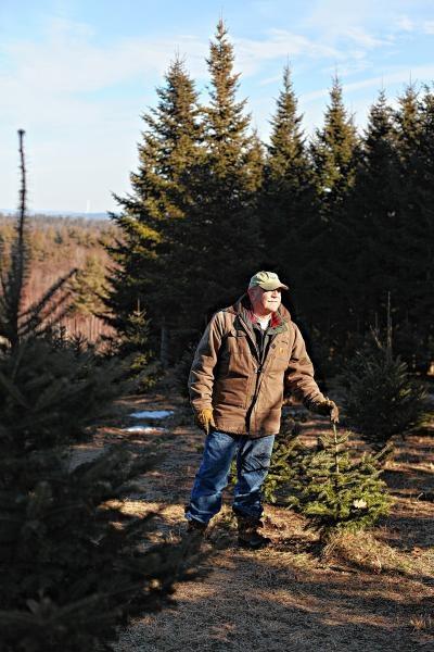 Christmas Tree Fram