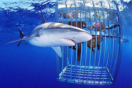 Up for shark cage diving?