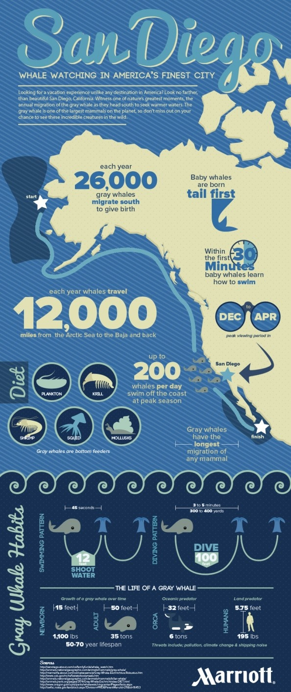 Whale Watching in San Diego  Infographic