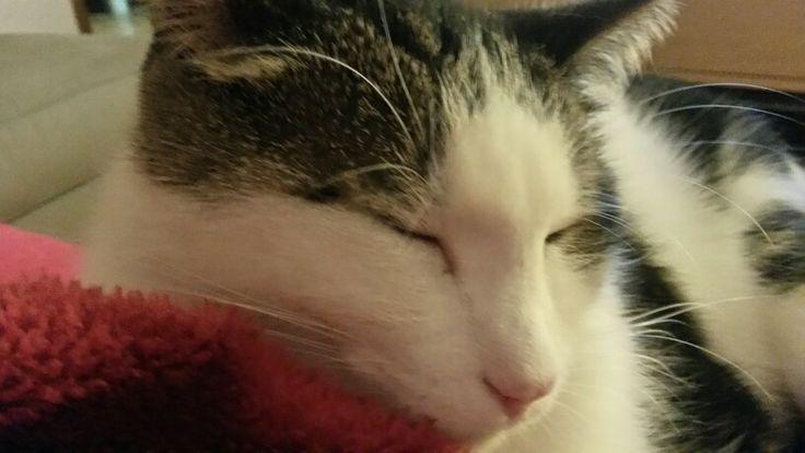 My cat♥♡♥