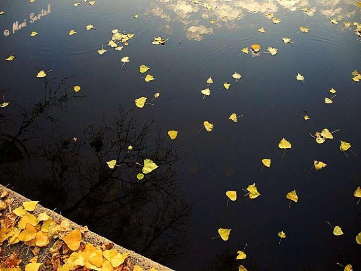 Lovely So sieht der Herbst an der Nahe in Bad M nster am Stein aus Bei uns darf das Herbstlaub noch v llig ungest rt von Eis und Schnee auf dem Nahewasser