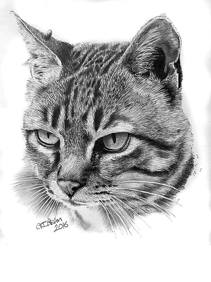 """This cat portrait pencil drawing is of a tabby cat called """"Mum Cat""""."""