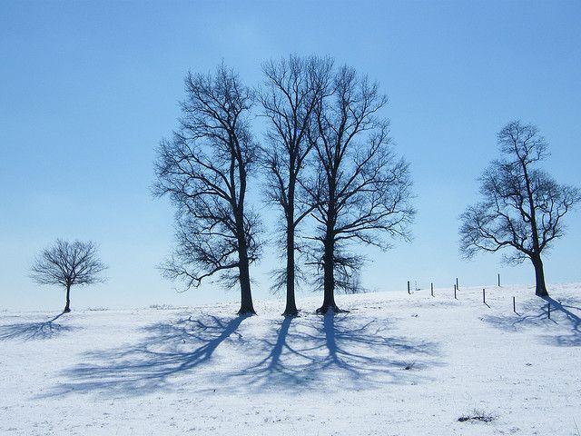 Winter Trees by Judi Lyn, via Flickr   teach   Pinterest ... Pictures Trees In Winter Pinterest