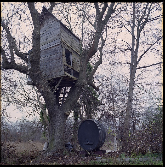 Hasselblad 500C – C – FujiReala100 – 11 – Christiania Tree House