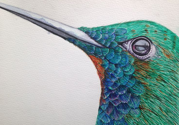 Learning Water Colours Sept 2014. Calgary, Canada. A bird without name.