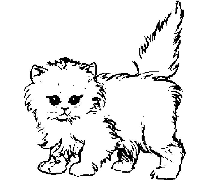 Thick Furry Cat Coloring Page