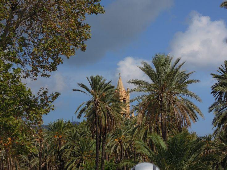 Palm park- Palermo