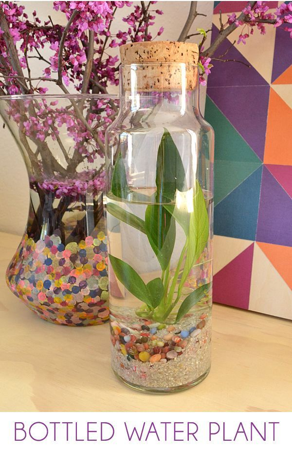 Easy Water Terrarium – Bottled Water Plants: A water terrarium is a simple and confined little ecosystem that is very pretty to look at and brings some natural grace to your home decor! via @Alison McCaffrey