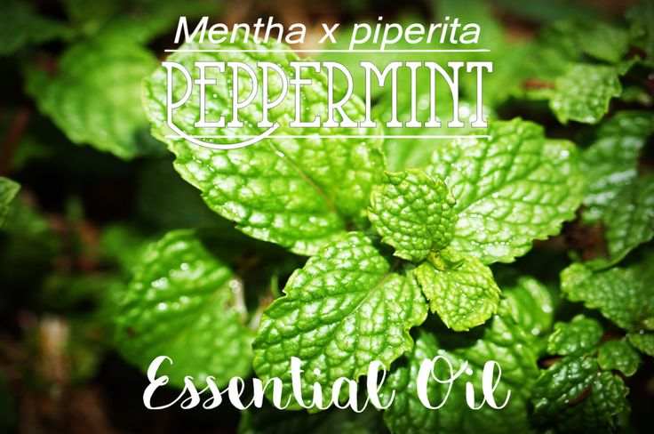 Online Shop | Peppermint Essential Oil in South Africa | Oh deer! Studio