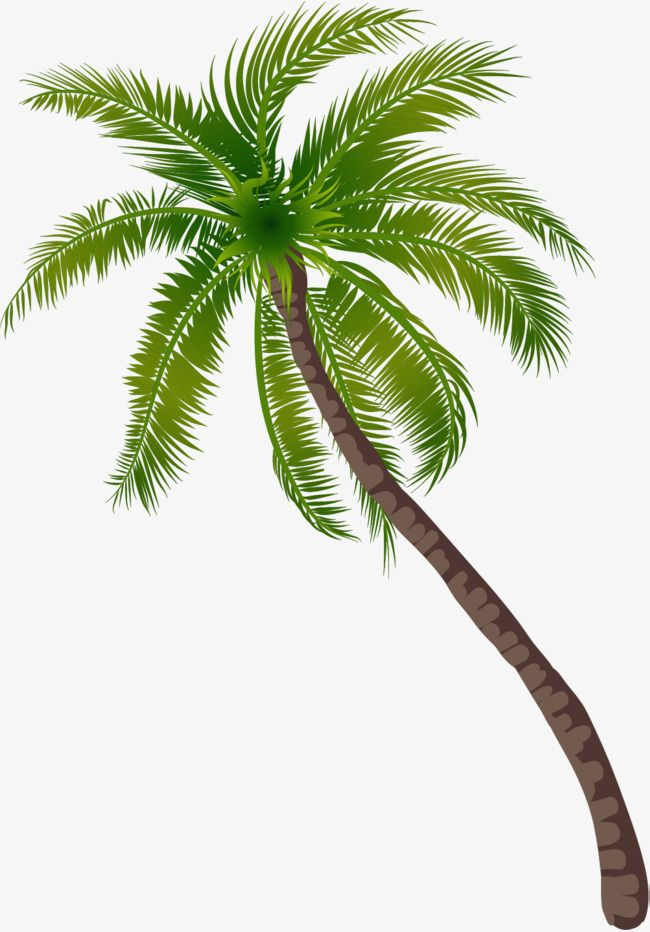 Coconut Tree Pattern, Coconut Clipart, Tree Clipart, Green