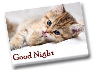 Good+Night+-+cat+&+dog