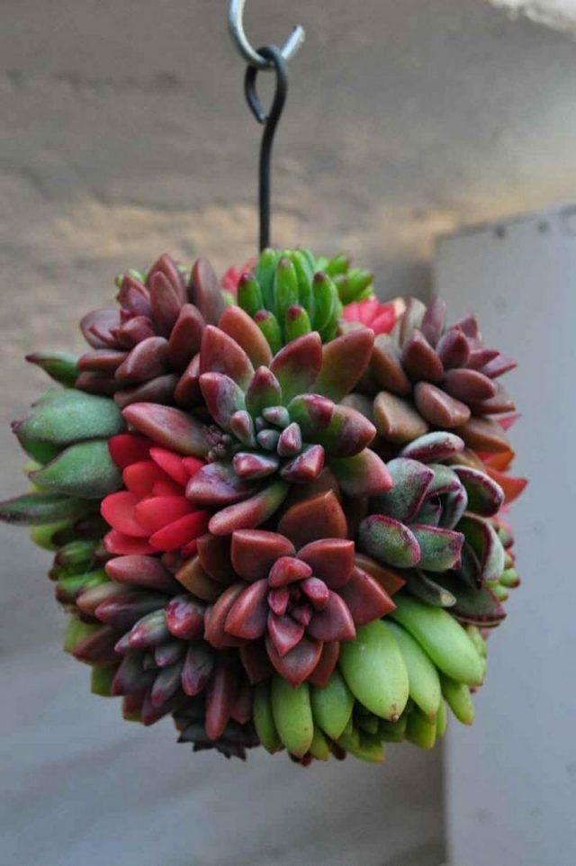 petite-boule de plantes grasses fabriquer-soi-même-décorer-jardin