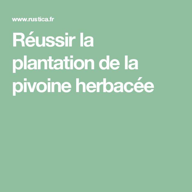 Réussir la plantation de la pivoine herbacée