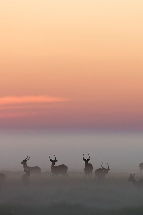 This photo creates a sensitive visual ambience. As a tip to designers, you can create this fog atmosphere in Photoshop.—Prof. Zeller