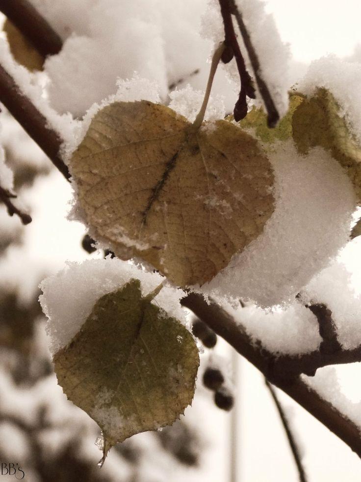 Autumn vs. winter by BiBiancaa.deviantart.com on @deviantART
