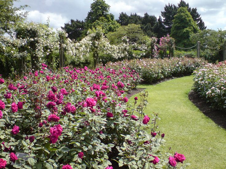 Because Regent's Park rose garden in the spring is a taste of heaven. | 57 Reasons Living In London Ruins You For Life