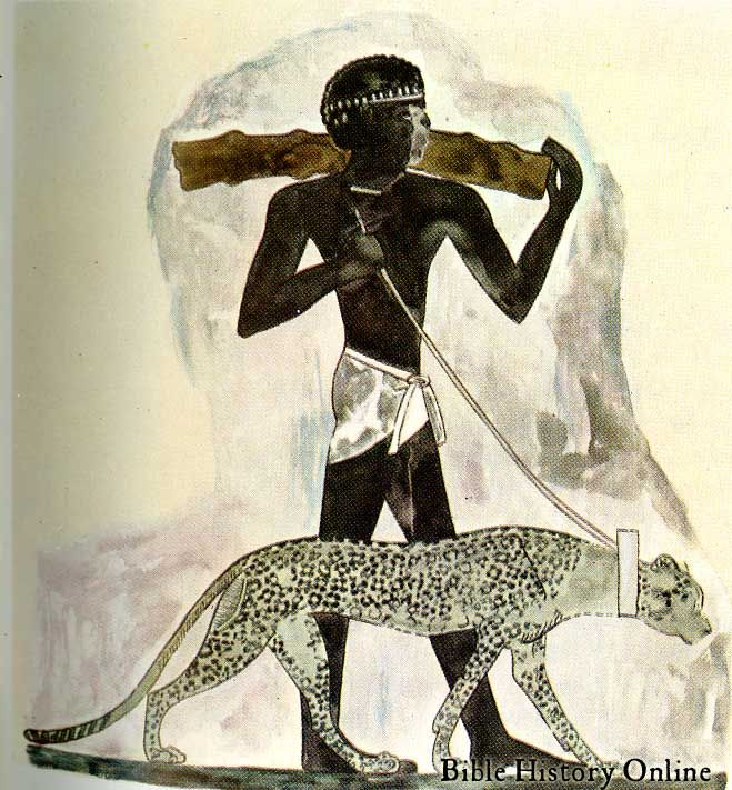 This 15th c. BC Egyptian wall painting is from the tomb of Rekhmire. It shows a Nubian in bare feet wearing a loin cloth, he is presenting the gift of a hunting leopard to Thutmose III