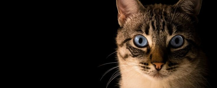 Up to 50 percent of global population is infected by the 'cat parasite' Toxoplasma gondii, and in some areas, the infection rate is as high as 95 percent . Unless you get tested, there's no way of knowing that you're infected, but it's been...