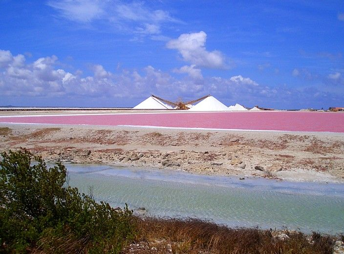 The South West Coast Has These Huge Salt Flats Bonaire Used To Be A Saltproducing
