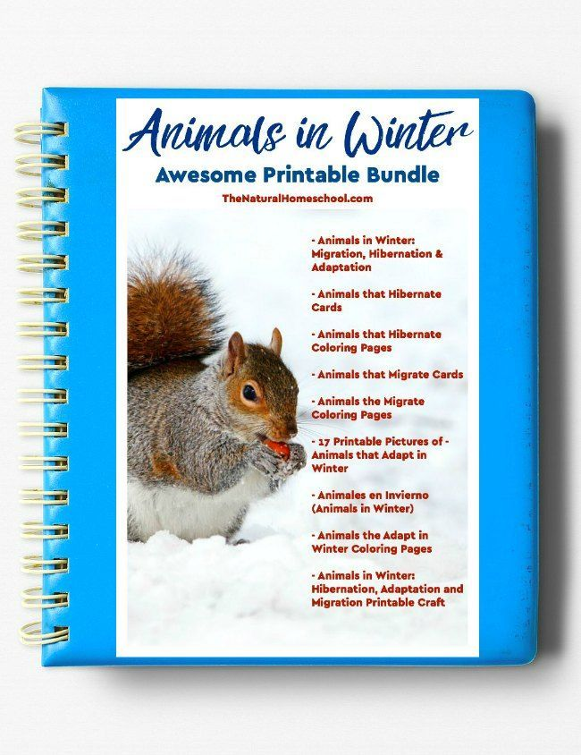 2037 best diy montessori activities images on pinterest animals in winter printable bundle ebook 1 fandeluxe Images