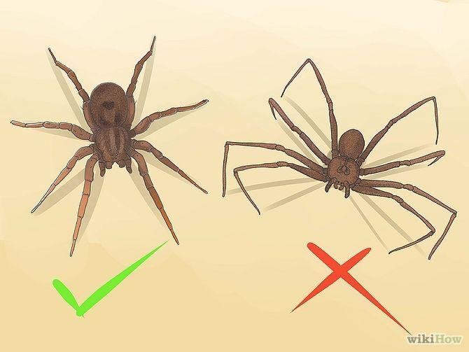 Identify a Wolf Spider Hate Spiders Wolf spider