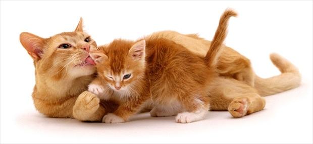 Gatti in passarella