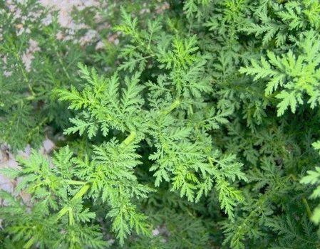 Pensieri & Parole: Artemisia