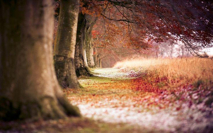 http://megahdwallpapers.net/wallpapers/l/1920x1200/64/autumn_trees_beech_1920x1200_63900.jpg