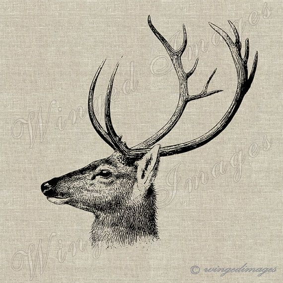 Deer III - WingedImages