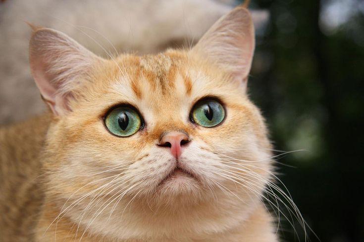 Хроническая почечная недостаточность у кошек » Женский Мир