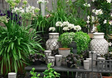 Фото со стока - Красивое расположение растений и черно-белая керамика в цветочный магазин