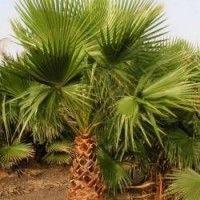 Vente Terrain Agricole Laghouat dans A vendre / للبيع sur Souk El Fellah, annonces de l'agriculture ALGÉRIE سوق الفلاح, اعلانات فلاحية الجزائر