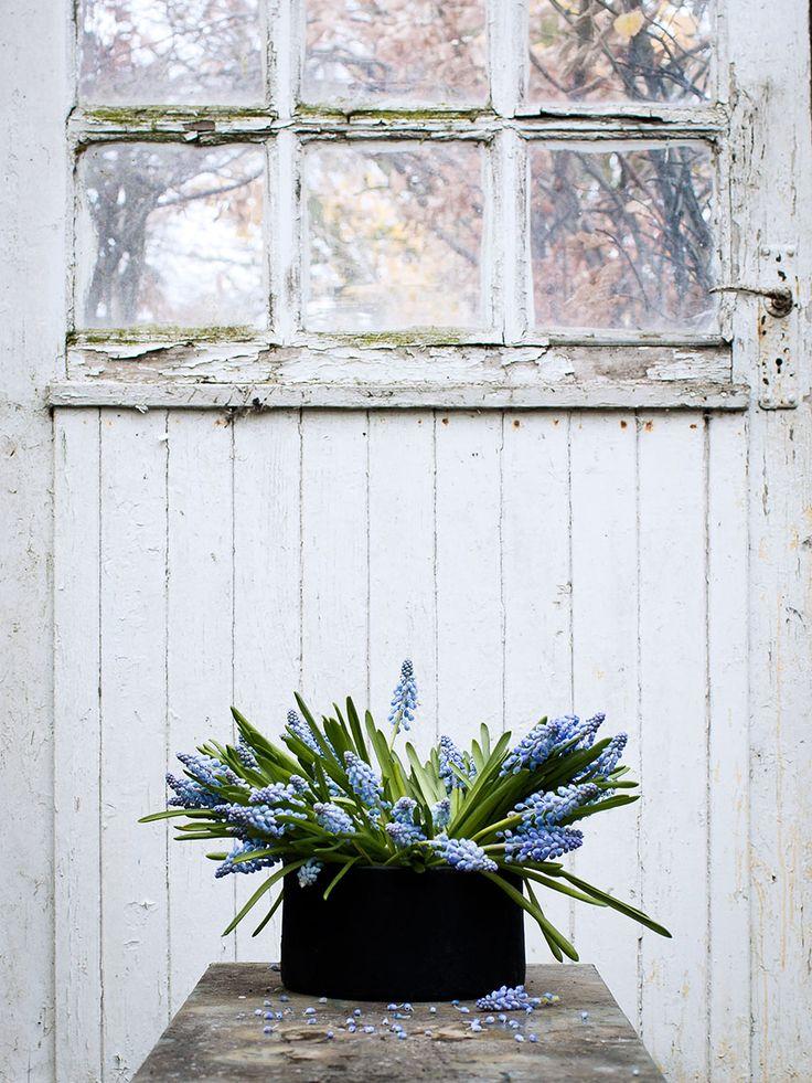 Våren närmar sig med stormsteg och i väntar på den låter vi oss inspireras av vårens vackraste växter!