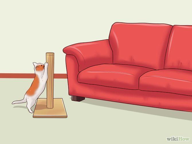 17 Best Images About Diy Pet Pet Recipes On Pinterest Cats Pet Food And Pet Gate