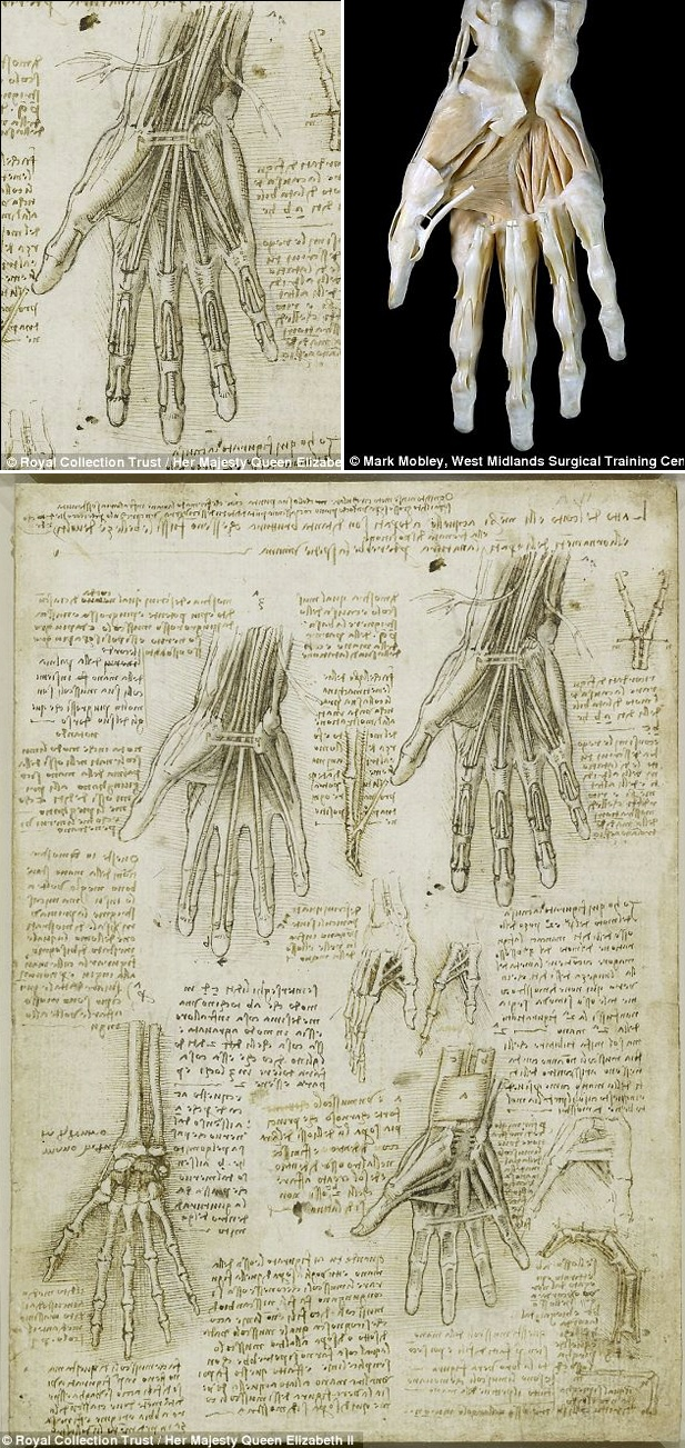 His paintings and artworks have been regarded as milestones in art history. But were Leonardo da Vinci's anatomical works accurate? And can these centuries-old drawings compete with modern medical imaging technology? Yes, they can.  More da Vinci's anatomical sketches:  https://pinterest.com/pin/287386019946407968/