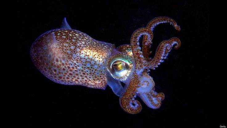 squid - Google Search