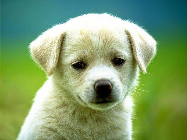 ♥ Começou nesta quinta-feira a Maior Feira de Produtos e Serviços para Animais Domésticos ♥ PE ♥  http://paulabarrozo.blogspot.com.br/2014/11/comecou-nesta-quinta-feira-maior-feira.html