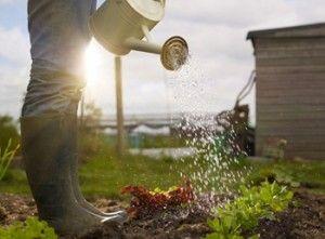 Una regola d'oro per chi coltiva un orticello è quella di annaffiarlo nelle prime ore del mattino o la sera dopo il tramonto, in modo da evitare sbalzi termici, dannosi per le piante. #Consigli #Orto