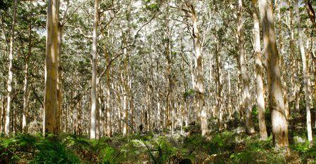 Karri Trees Margaret River