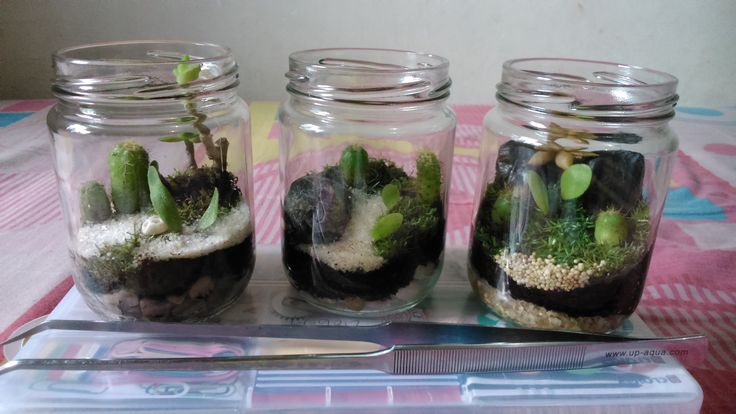 Terarium Toples 250 ml