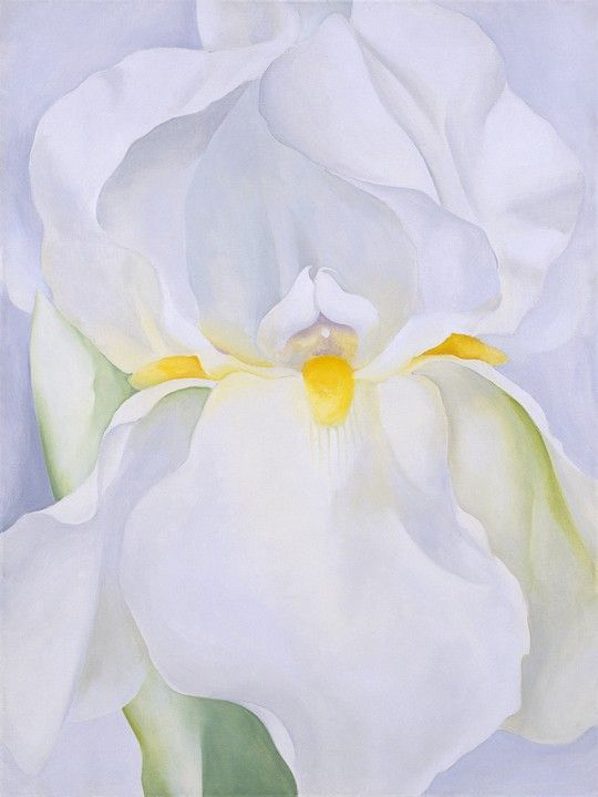 Georgia .  White Iris, No. 7, 1957 © 2009 by Georgia O'Keeffe Museum / © Georgia O
