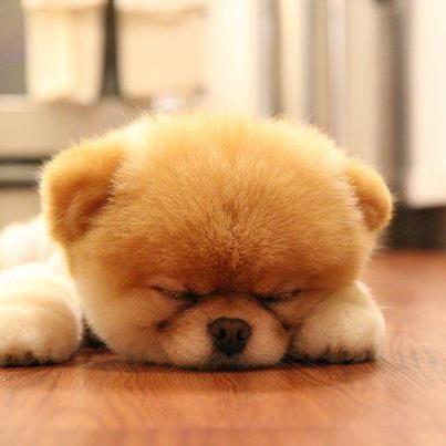¿Quien es capaz de resistirse ante un cachorrito como éste?