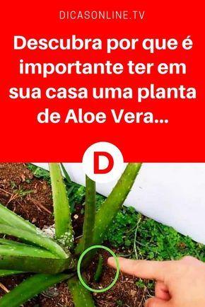 Beneficios aloe vera | Descubra por que é importante ter em sua casa uma planta de Aloe Vera... | Descubra por que é importante ter em sua casa uma planta de Aloe Vera... A Aloe Vera é bastante conhecida pelas suas propriedades medicinais.
