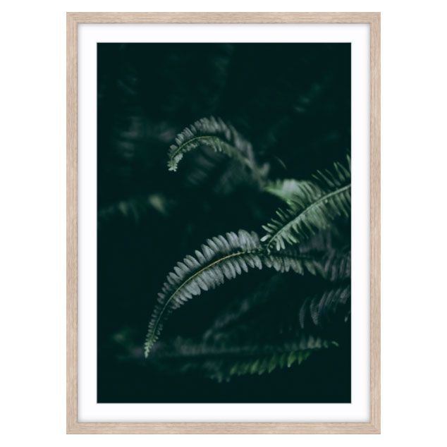 Dark Foliage 1 of 2 Photo by Elemental Prints | Interior Wall Art. www.elementalprints.com.au