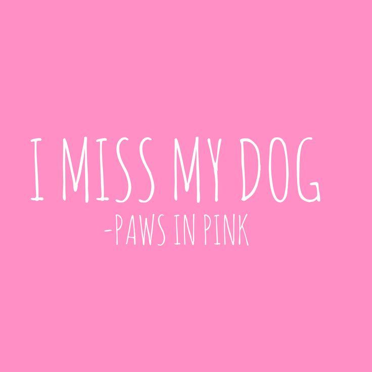 I miss my dog