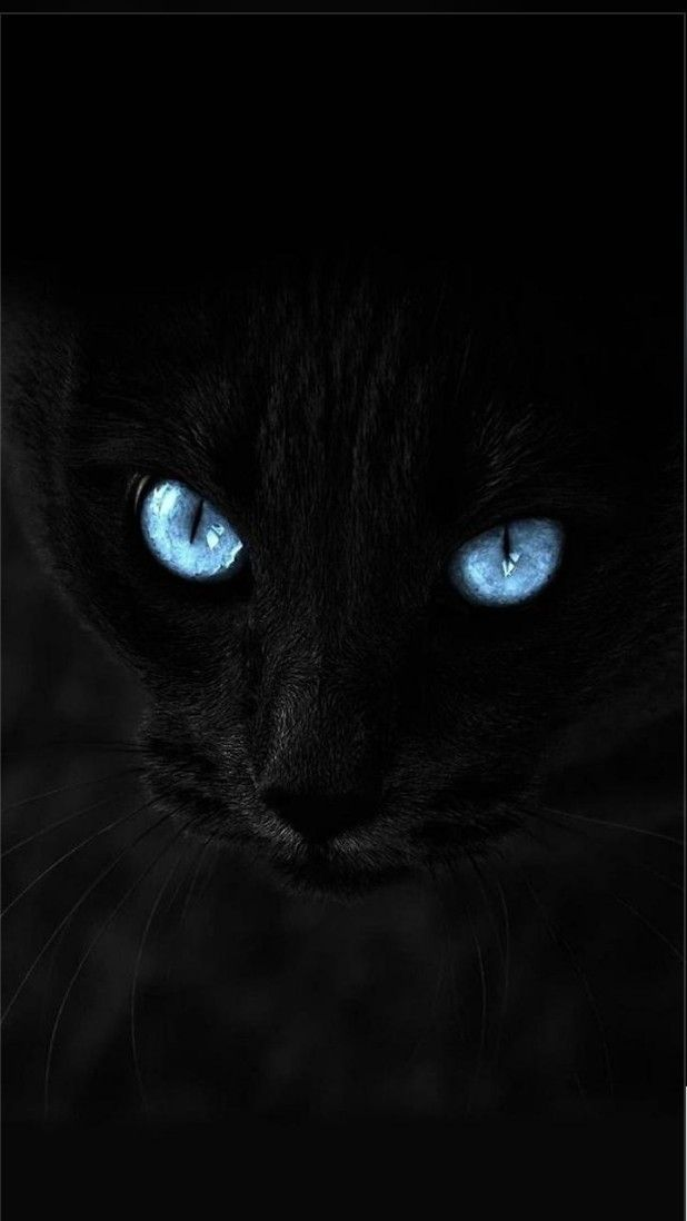 Android Wallpaper Notitle Androidwallpaper Androidwallpaper4k Androidwallpaperblack Androidwallpaperhd1 Cat Wallpaper Cat With Blue Eyes Beautiful Cats