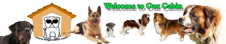 DOG HOUSE CABIN - BEST DOG CRATE SIZES AND SUPPLIES FOR YOUR DOGS Check out for more information, reviews, and…