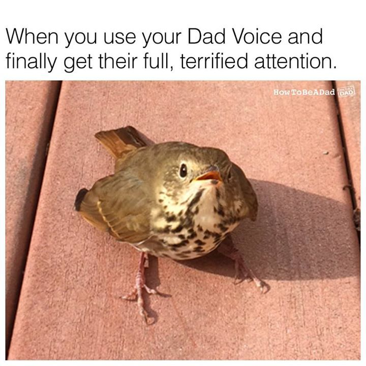 Every parent has the VOICE.