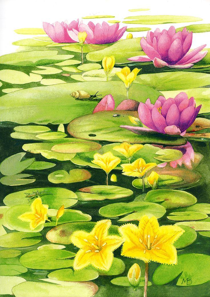 Marjolein Bastin - pond snail on lily pad from July 2009 Calendar